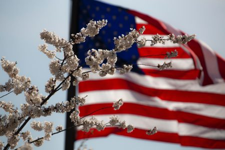 American flag with blossom .
